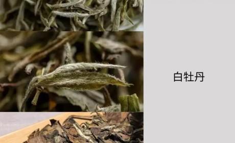 寿眉丨最貌不惊人的口粮茶,为何可以一路在茶界逆袭圈粉