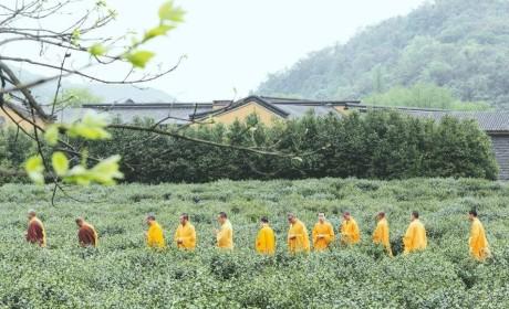 茶喝的不只是树叶?佛学院禅茶教授告诉你:喝的是文化!