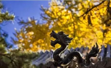 大快人心!拆除2万平米违章建筑 还原北京最古老寺院美貌