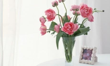 冬季在家养花草 让你的家温暖如春