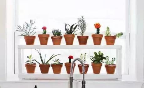 你家没地方种花?教你5招打造室内花园