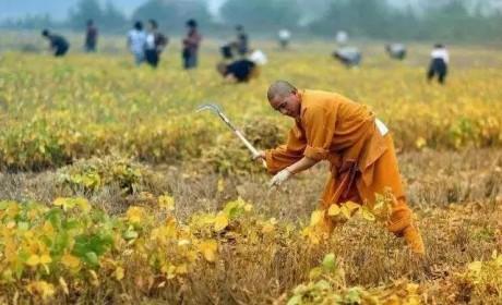 劳动节不放假!一日不作一日不食的佛门农禅传统一起来了解一下