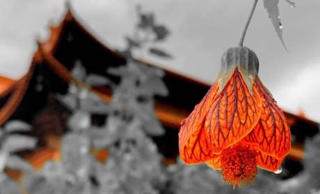 想去的看过来!2019年度佛教与东亚文化国际寒期研修班值得关注
