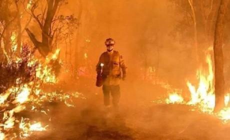 祈愿早日扑灭!5亿动物被烧、8000只考拉丧生……澳洲在失控的大火中悲鸣