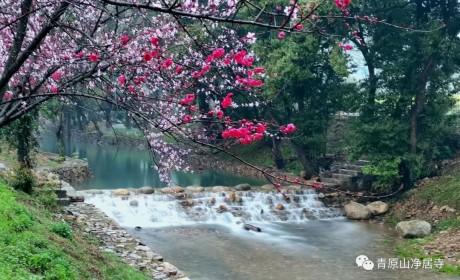 青原山净居寺开放通告:自2020年3月31日起,青原山净居寺恢复正常对外开