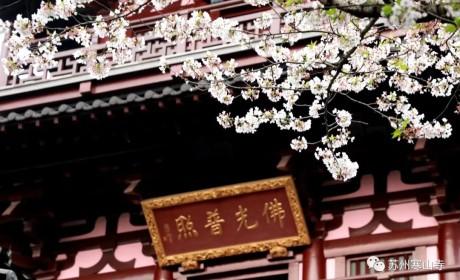苏州寒山寺发布公告 自2020年6月2日起恢复开放